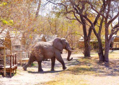 O Bona Moremi Elefant im Camp
