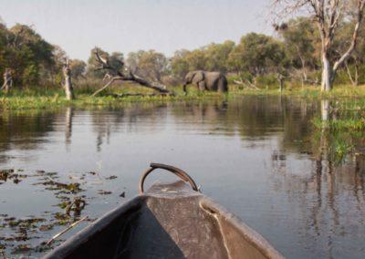 View from a traditional Mokoro Safari in Khwai Botswana