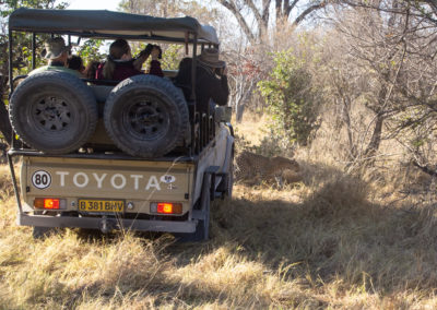 Leopard walking past the Safari Vehicle in Khwai