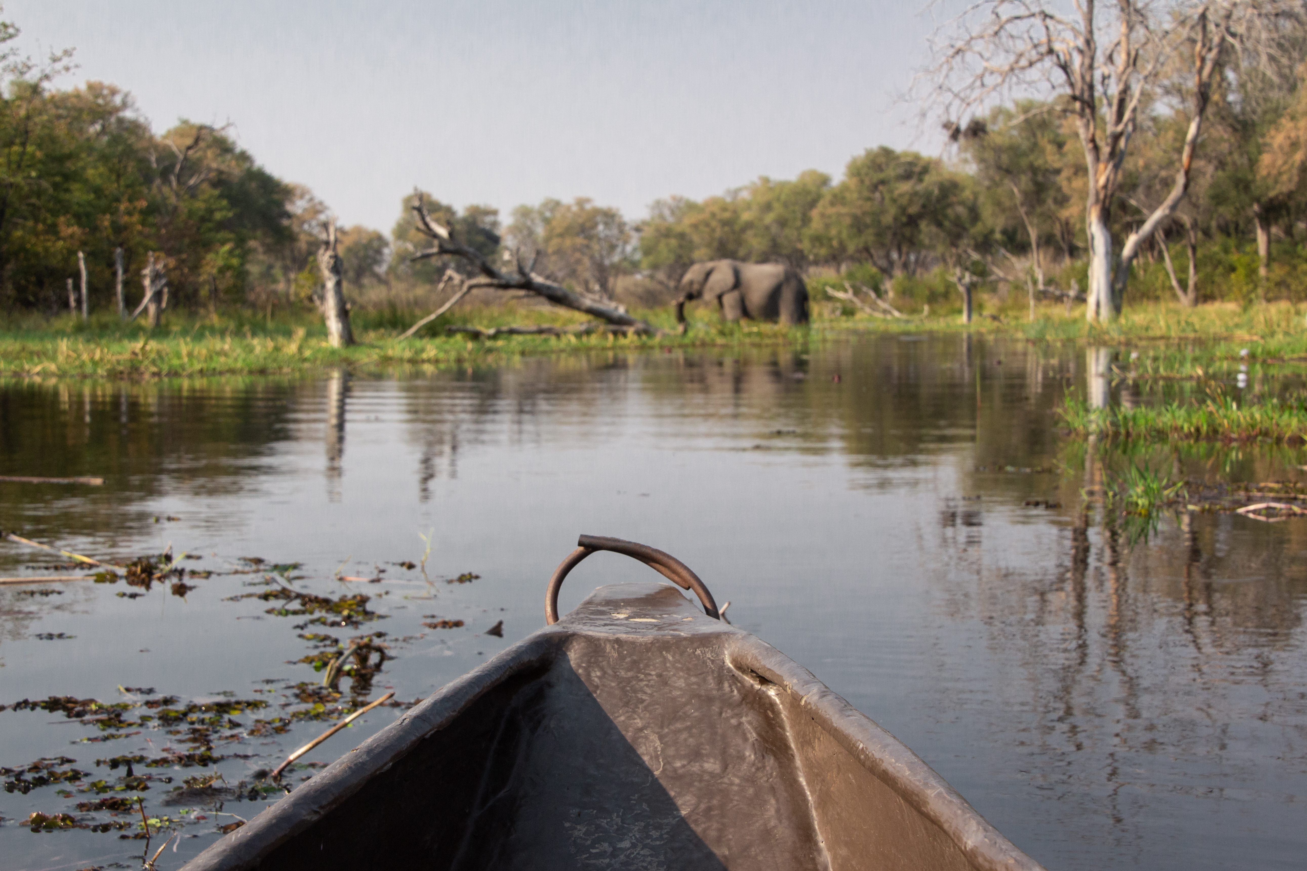 View from a traditional dugout canoe called Mokoro on a Botswana Safari in Khwai.