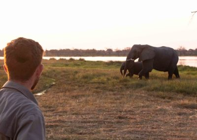 Guest observing two elephants walking past on a guided walking Safari