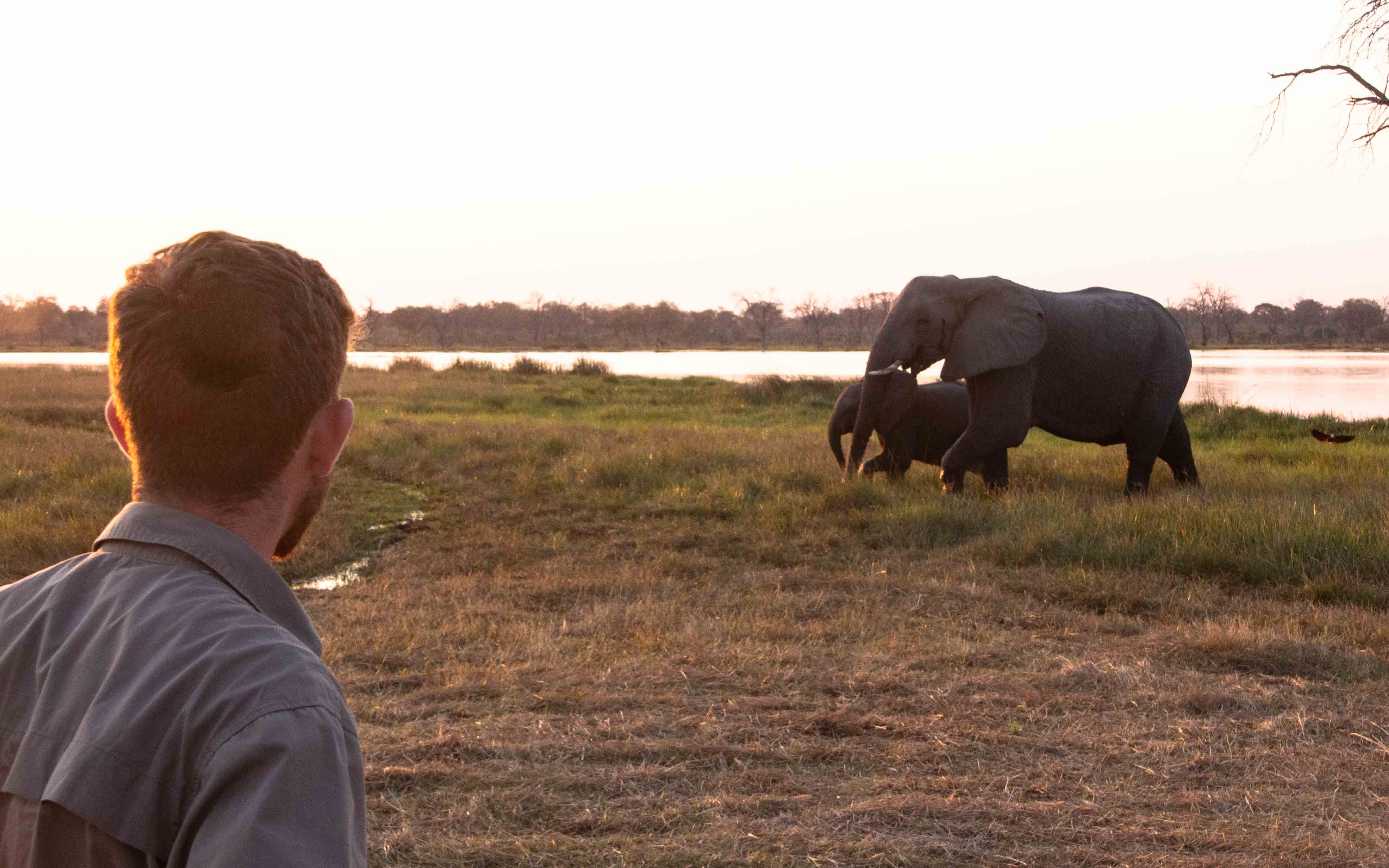 Guest observing the wildlife of Botswana on a walking Safari in Khwai.
