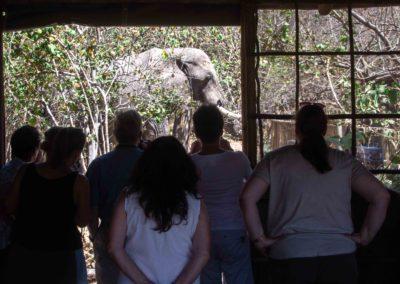 Guests observing an elephant in O Bona Moremi Safari Lodge